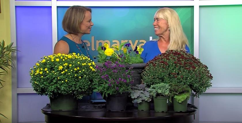 Allergy-Prone Plants & Fall Plants with Ginny Rosenkranz – Thursday, Sept. 10, 2015