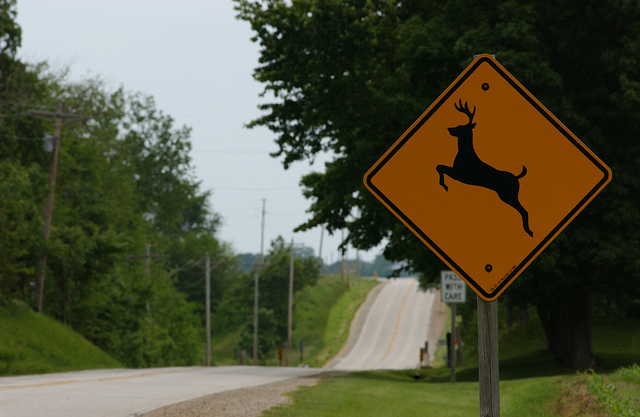 Deer Collisions with State Farm – Wednesday, Sept. 23, 2015