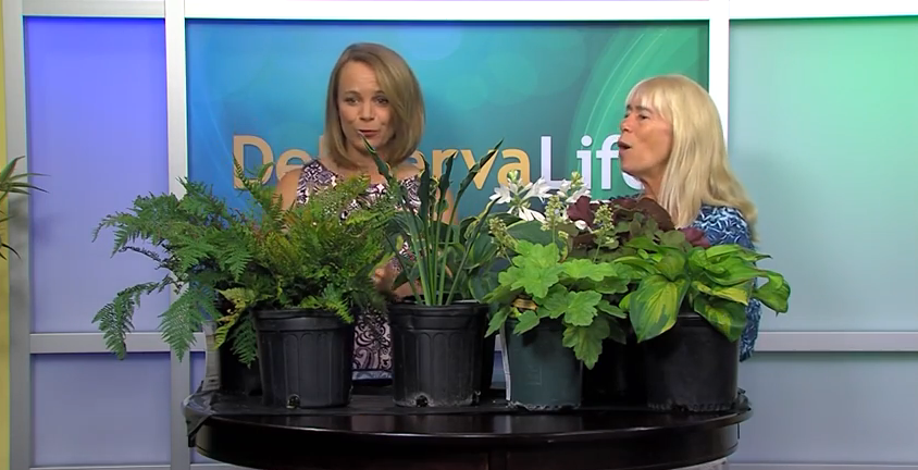 Gardening for Shade with Ginny Rosenkranz- Wednesday, August 26, 2015