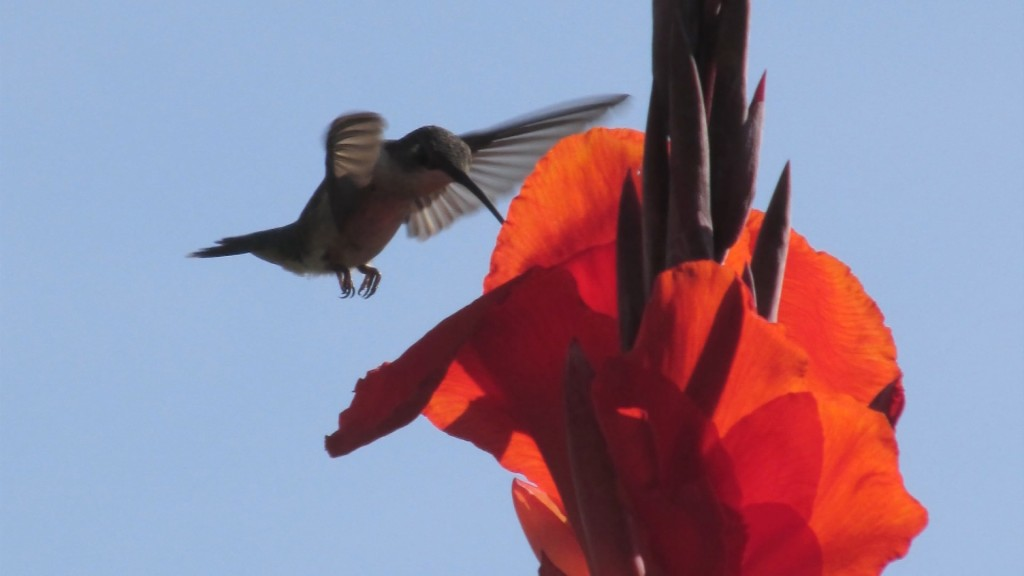 Travels With Charlie: Hummingbirds' Favorite Place in Somerset County