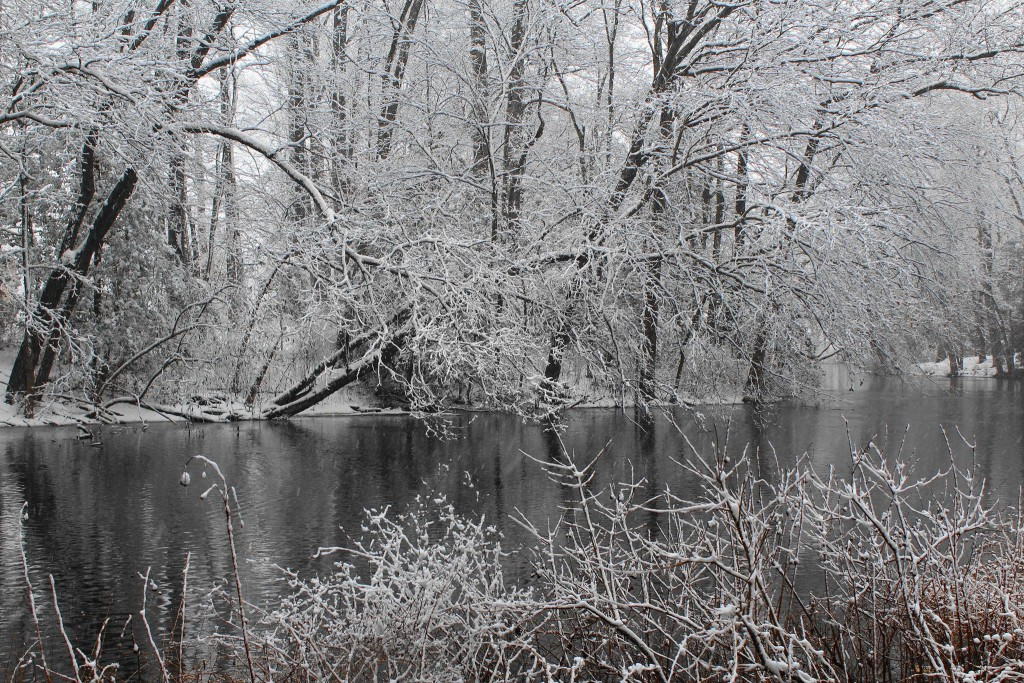 Viewer Photos: First Snow on Delmarva for 2016