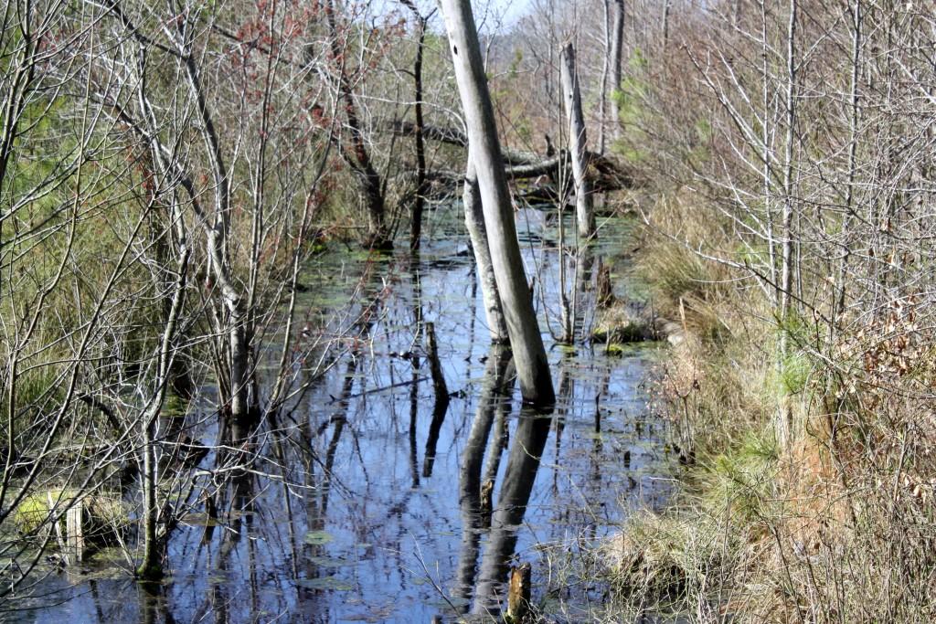 Delaware Wild Lands Inc. Work Toward Wetlands Restoration