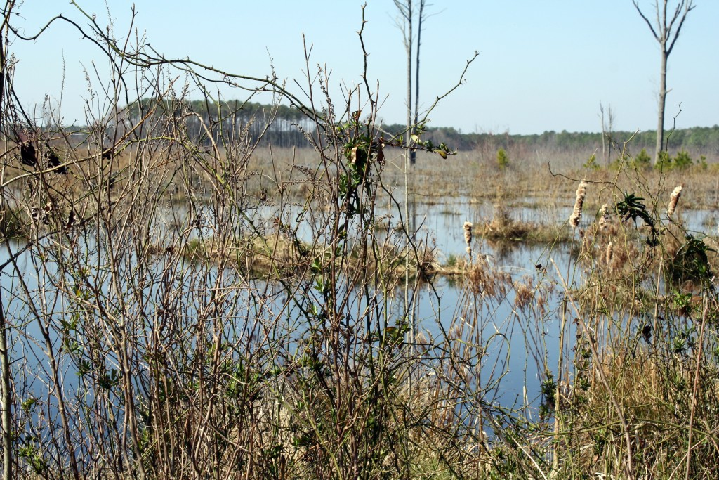 The Great Cypress Swamp Wetlands Restoration—Gallery