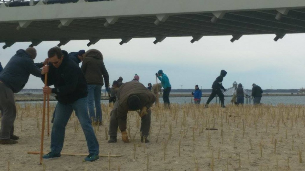 Sandy Success: Delaware Beach Grass Planting Sees Good Turnout