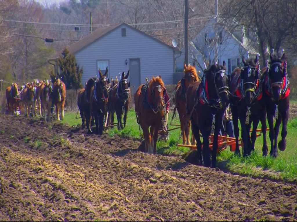 Travels With Charlie: 10th Annual Mount Hermon Plow Days