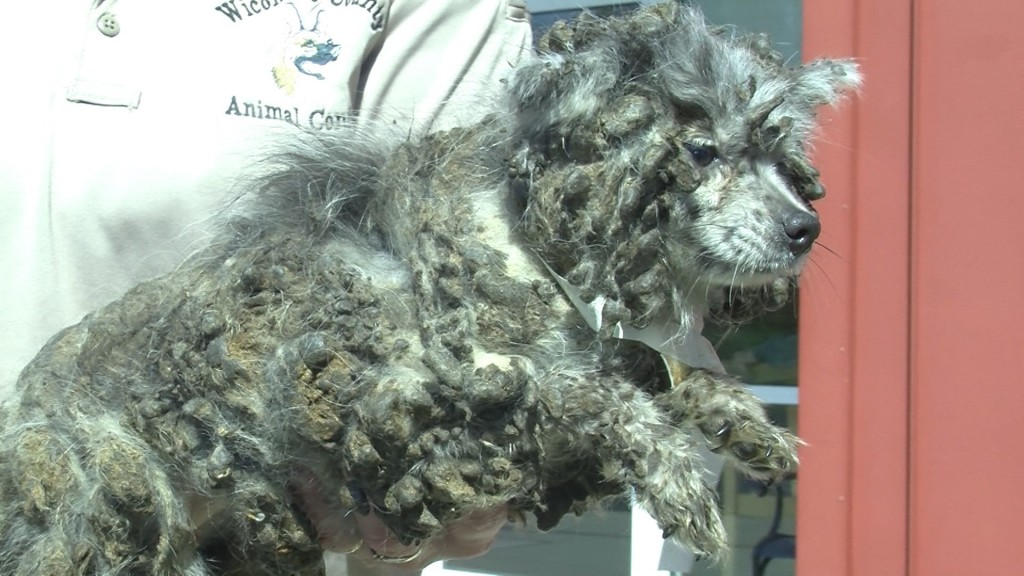 One of the dogs seized from the Eden, Md. home, currently at the Humane Society of Wicomico County