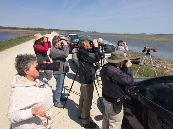 Delmarva Spring Birding Weekend Identifies 101 Species on Day 1
