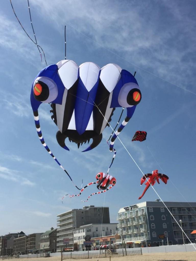 Maryland International Kite Expo (Courtesy: Kite Loft)