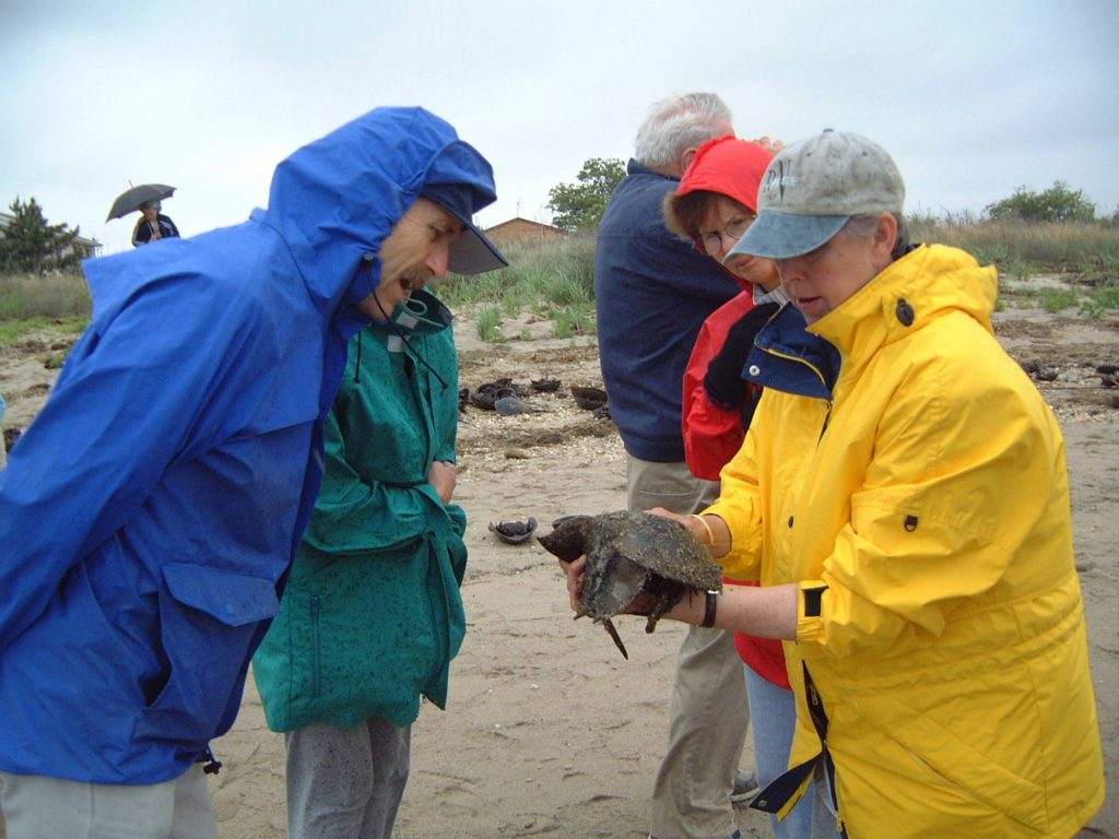 Prime Hook Wildlife Refuge Hosts Horseshoe Crab and Shorebird Festival on May 28