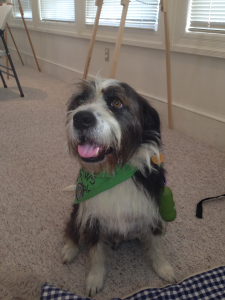 """Bo"" is a trained therapy dog in the ""PAWS for Reading"" program"