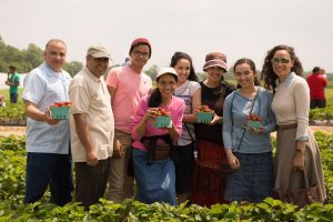 A group picks strawberries through Fifer's U-Pick experience. (Photo Credit: Fifer Orchards)