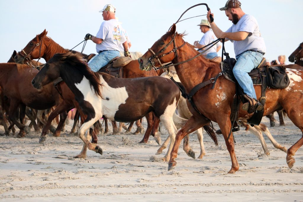 Chincoteague Holds Activities All Week Revolving Around Famous Pony Swim
