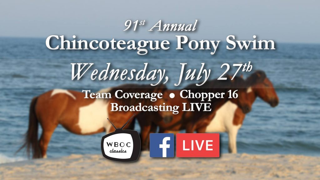 Chincoteague Pony Swim Preview with WBOC's Multimedia Journalist, Lauren Holloway