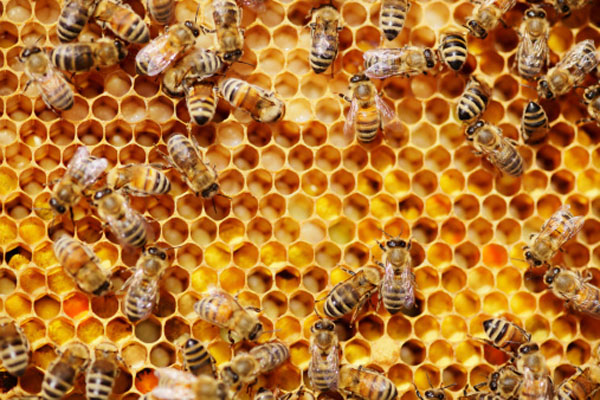 See Open Beehive at Smyrna Event
