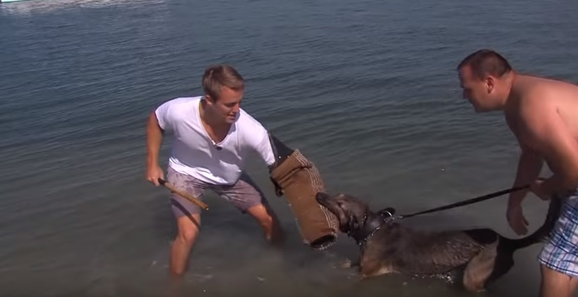 Sean Gets an Up-Close Look at K-9 Water Training