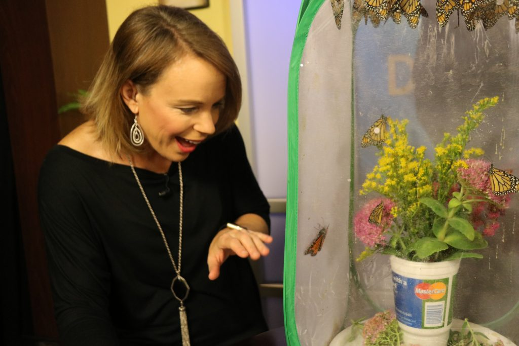 Why Tagging Butterflies Benefits Them