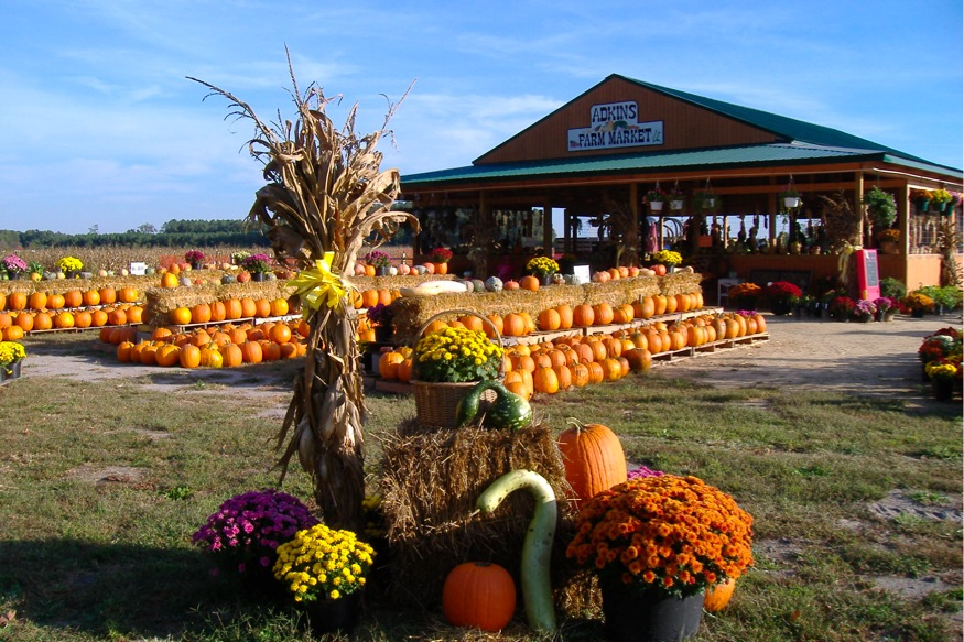 Maryland and Delaware Pumpkin Patches to Explore in 2016