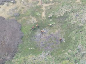 Aerial photo of Assateague Island from Chopper 16 (Photo: WBOC)