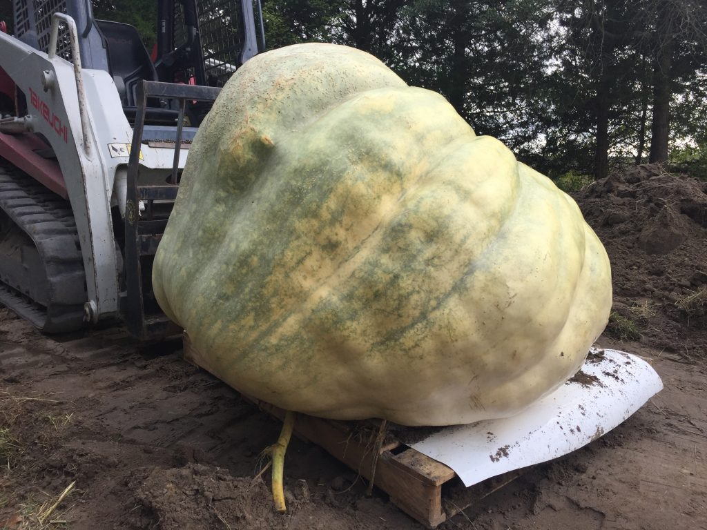 Giant Pumpkin in Greenwood, Del.