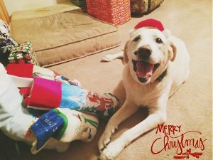 Merry Christmas, from Molly Kamp of Stevensville, Maryland.