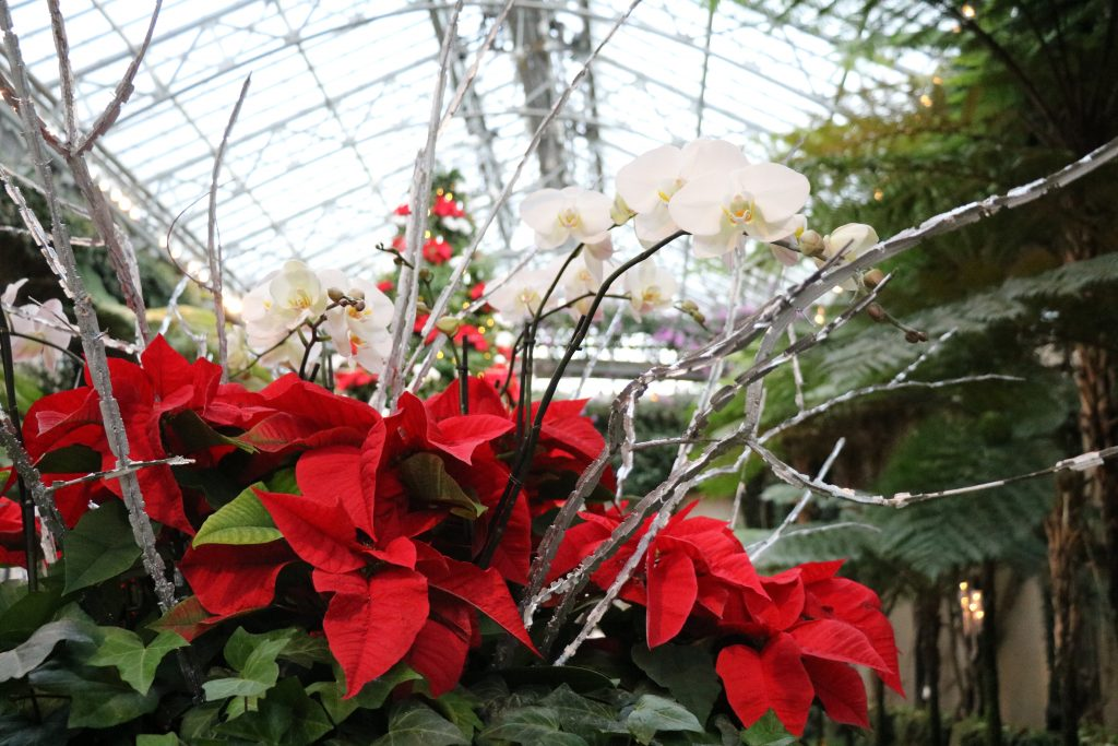 Delmarva Day Trip: A Longwood Christmas at Longwood Gardens