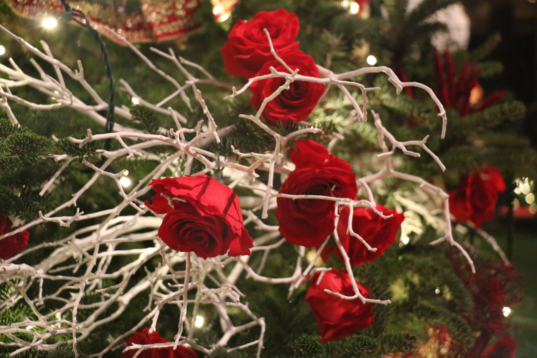 Delmarva Day Trip: A Longwood Christmas at Longwood Gardens ...