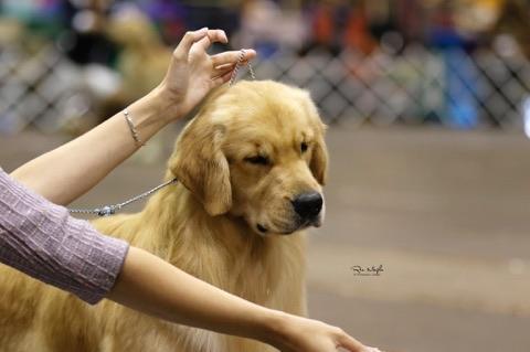 Eastern Shore Classic Dog Shows Nov. 8-12