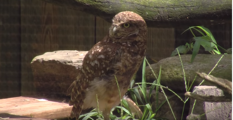 Give a Hoot Event at the Salisbury Zoo
