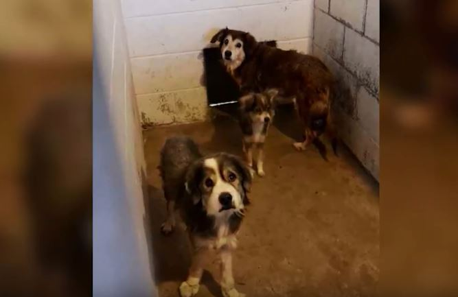 Baywater Animal Rescue Takes in Thirteen Dogs After Owner is Diagnosed with Brain Cancer