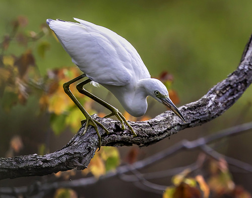 Md. DNR Annual Photo Contest Now Taking Submissions