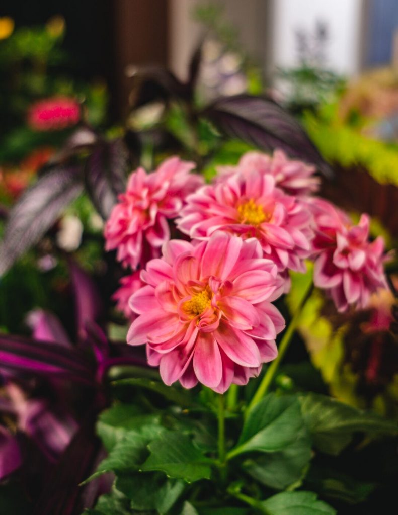 Gardening with Ginny – Plants That Thrive in the Shade or Sun