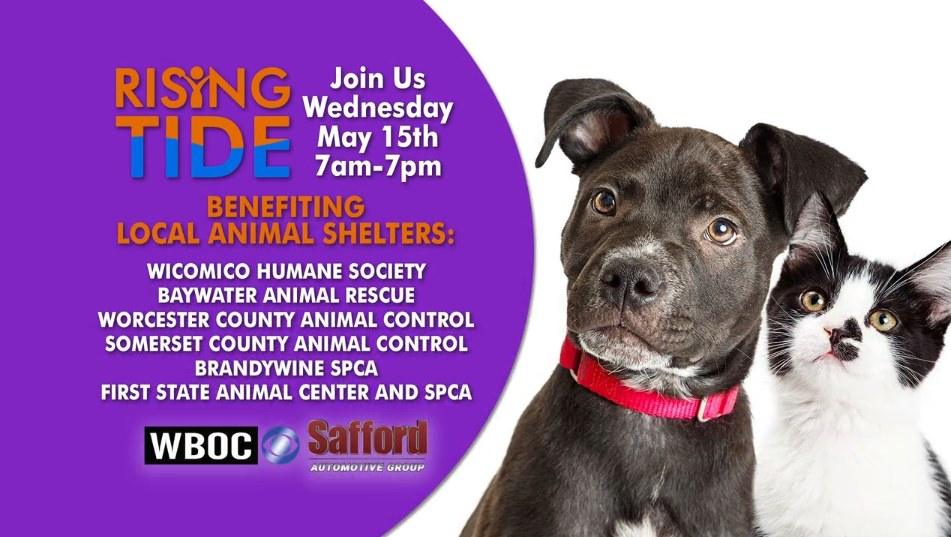 Rising Tide Campaign 2019 – Worcester County Animal Control