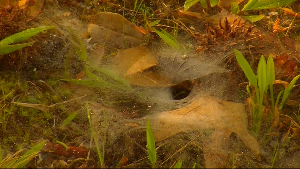 Travels With Charlie: Funnel Web Spider