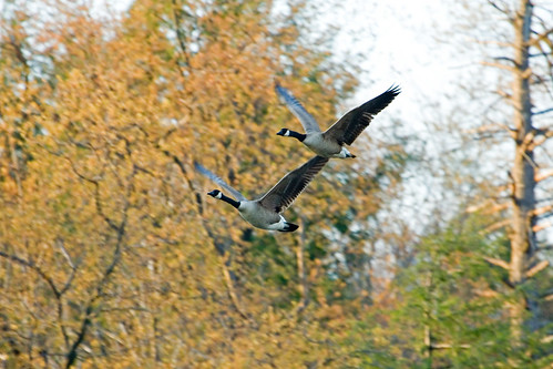 Md. Migratory Game Bird Hunting Seasons 2019-2020 Announced