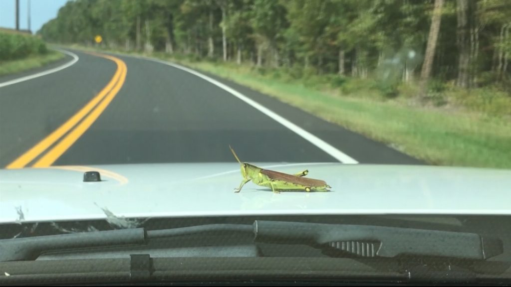 Travels With Charlie: A Bug's Life and Death