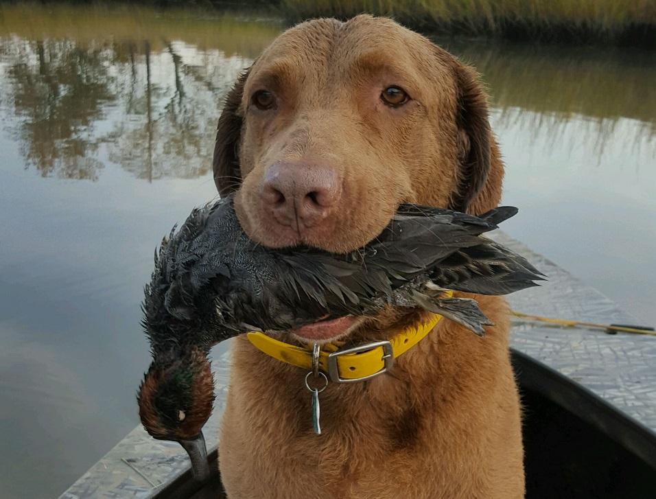 DNREC: Delaware Hunting Seasons Opening in October