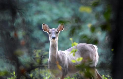 Maryland Reports Early Season Deer, Turkey Hunt Results