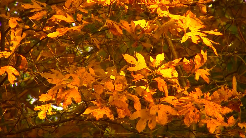 """Travels With Charlie: The Song """"Autumn Leaves"""""""