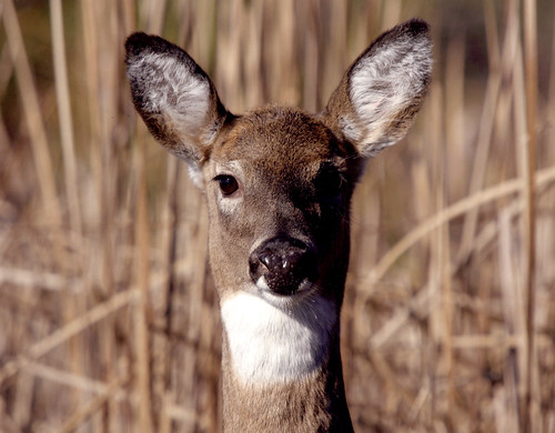 Hunters Harvest 27,000 Deer During Maryland Firearms Season
