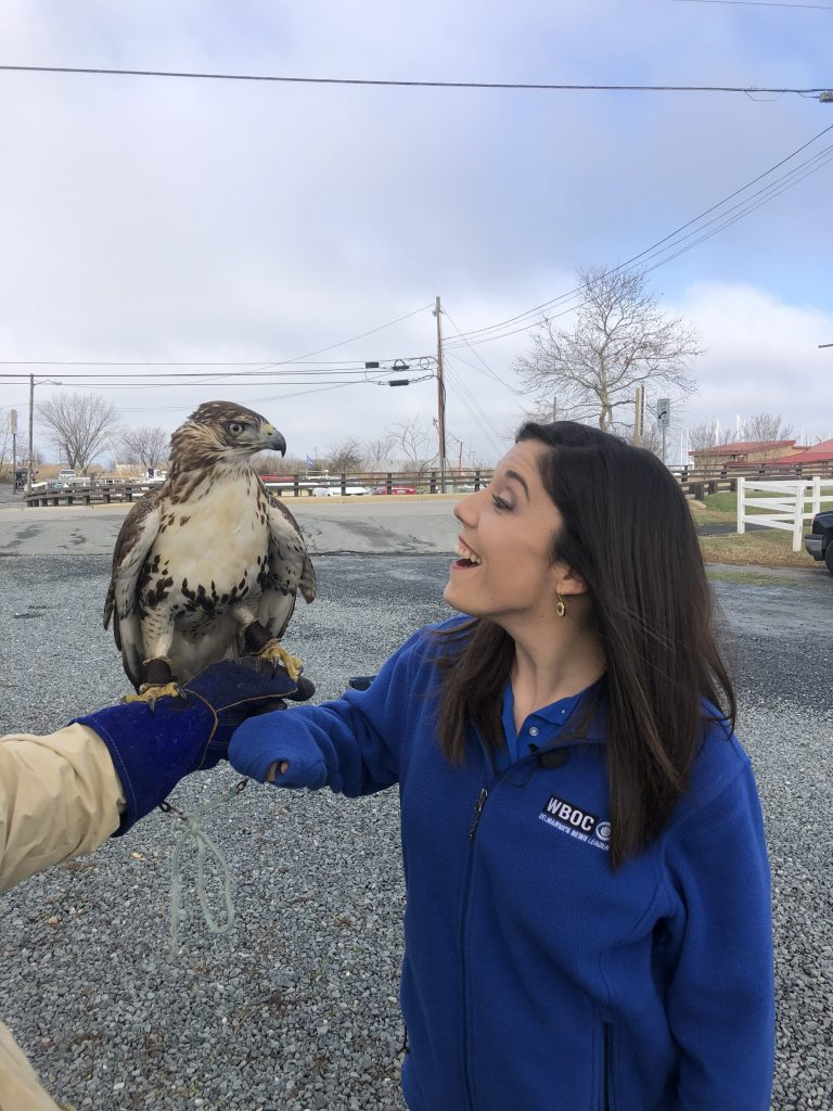 Katie Zarrilli Visits Tilghman Island To Learn About The Fascinating Sport Of Falconry