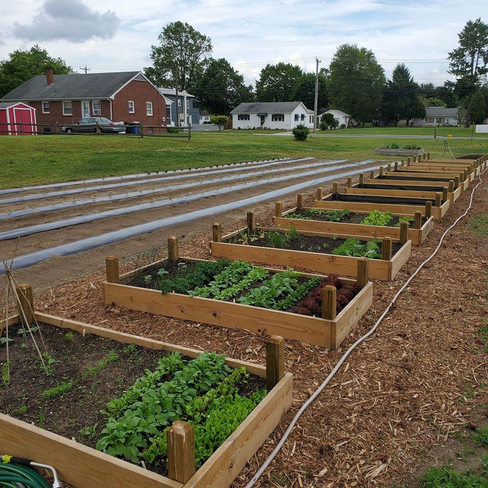Milford Community Gardens Bringing Benefits Beyond Nutrition
