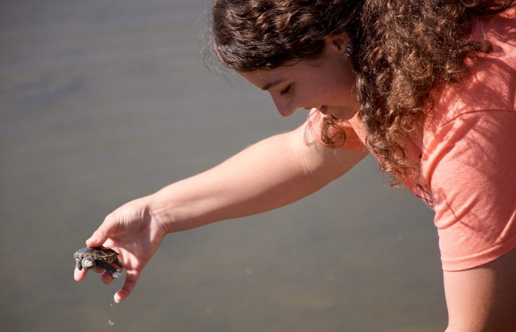 Phillips Wharf Environmental Center Looking For People Who Will Foster Turtles