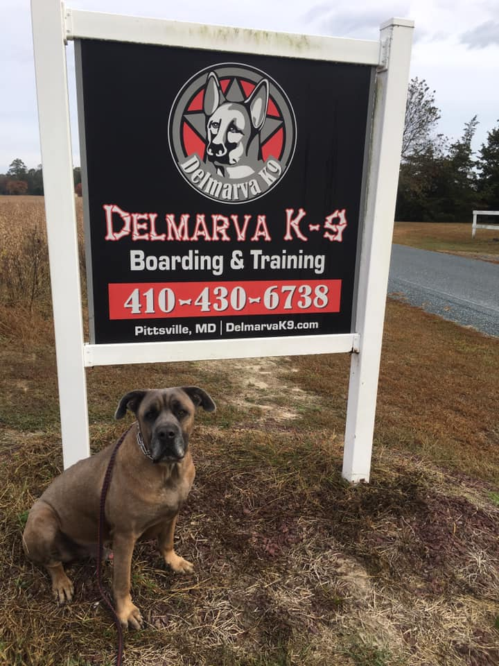 J.C. Richardson, Owner of Delmarva K9, Shares How To Keep Your Pets Cool and Comfortable This Summer