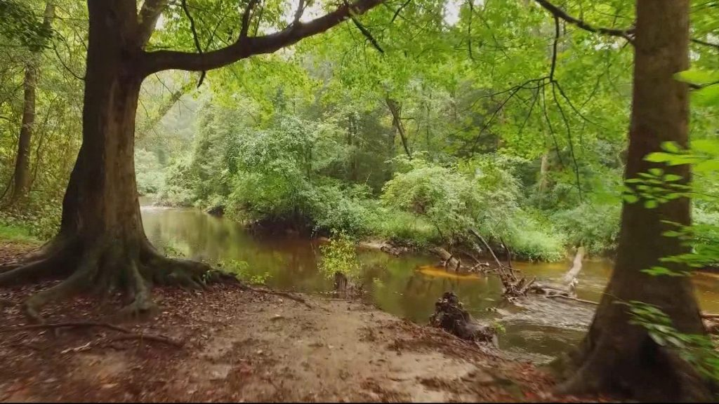 Travels With Charlie: Forest Stream
