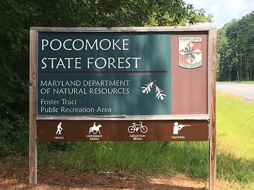 Public Input Sought for Pocomoke River Wildlands Expansion Proposal
