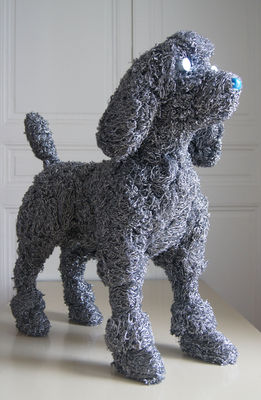 poddle:caniche-2663