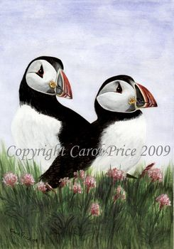 Puffins in Sea Thrift