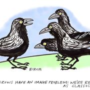 Crows (The Oldie)
