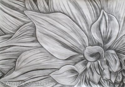 Large Graphite Dahlia Drawings