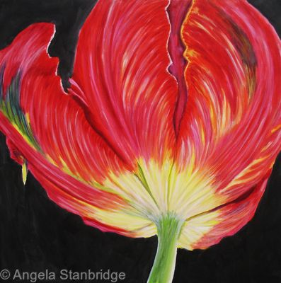 Red Tulip 3